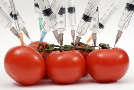 Фрејк Јанмат: У процесу усклађивања са европским законодавством Србија ће морати да промени забрану увоза ГМО