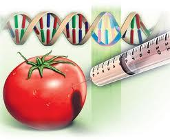 genetski%20modifikovana%20hrana1.jpg